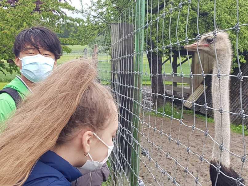 DaZ-Intensiv-Klasse besucht Straussenhof
