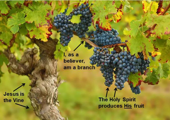 3-10 Abiding Study on John 15 - The Vine and the Branches