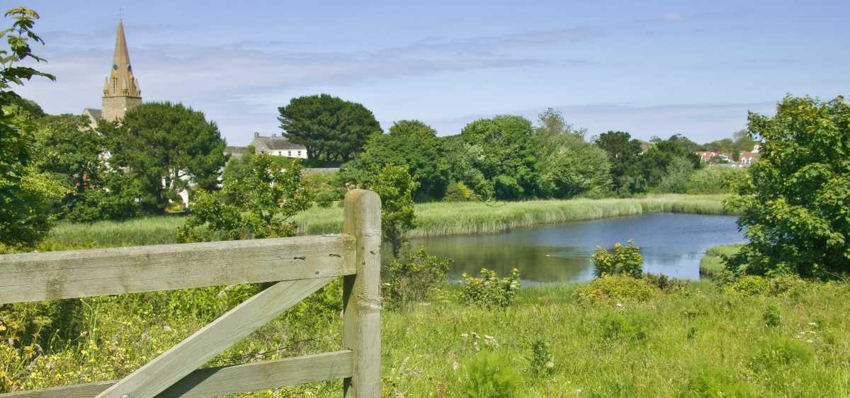 Vale Pond Nature Reserve
