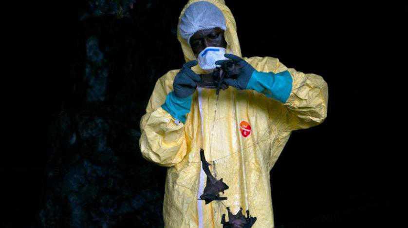رحلة البحث عن الفيروسات الناشئة في غابة الغابون البكر