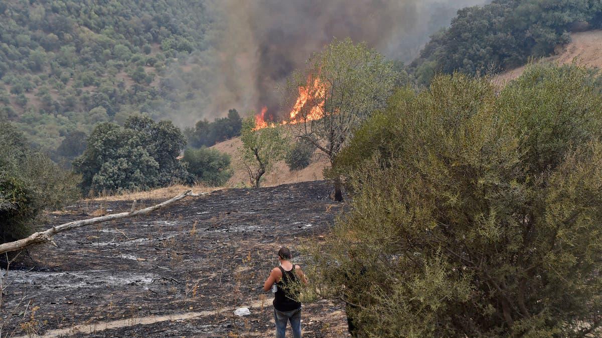 حرائق الجزائر أتت على أكثر من 5000 هكتار من الأشجار المثمرة