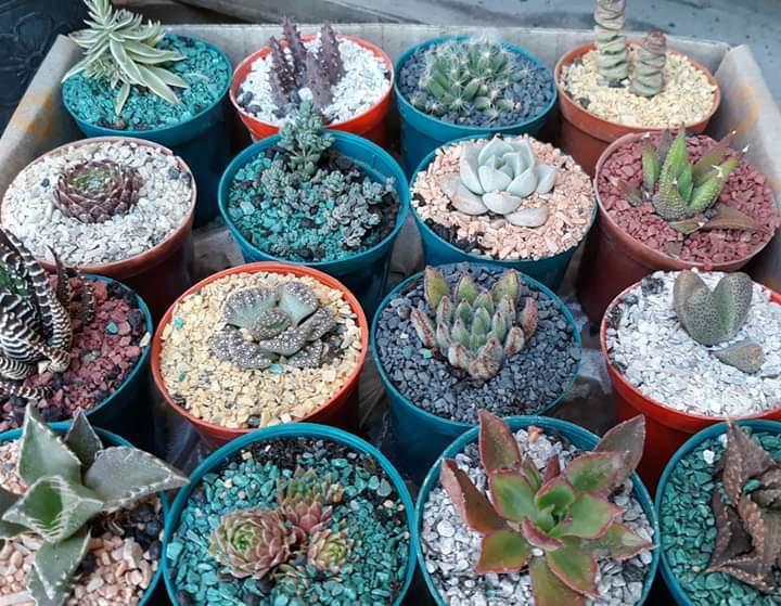 Flora Almacén de Plantas