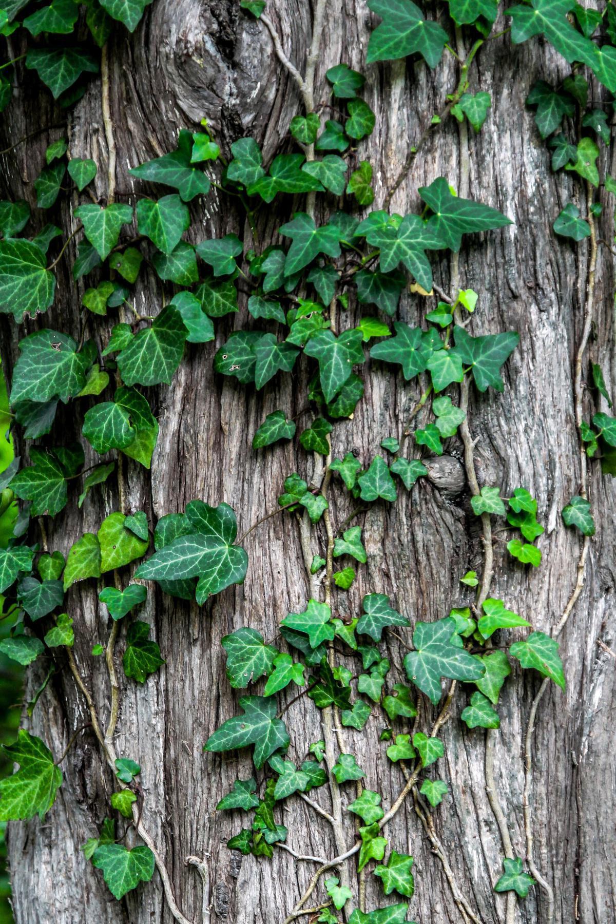 Colombia, Alemania, Noruega y Reino Unido, unidos para reducir la deforestación en Colombia