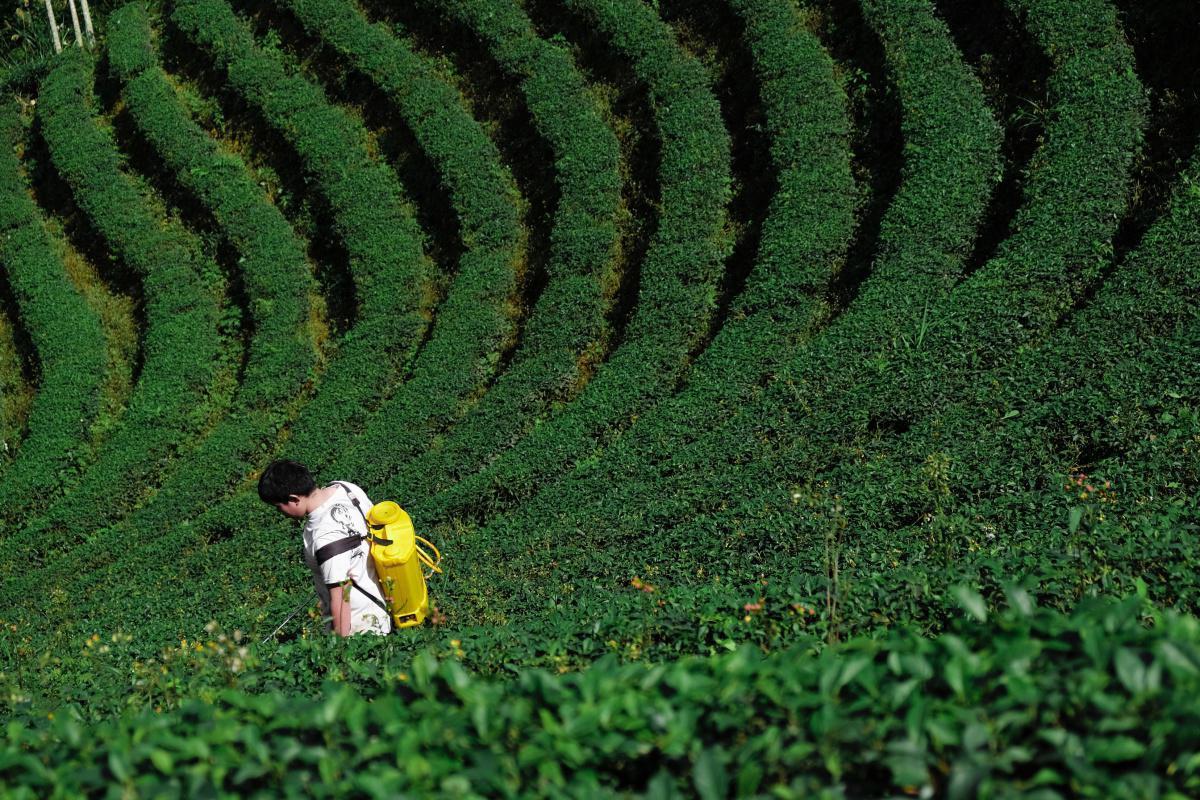 Fuerza Pública superó cifra de erradicación de cultivos ilícitos de 2019