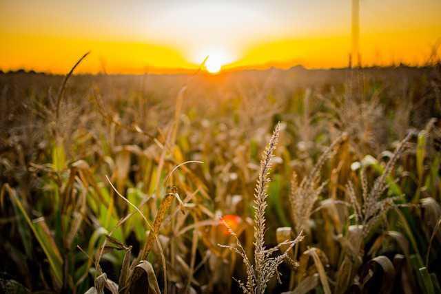 Exportaciones colombianas de productos agropecuarios, alimentos y bebidas crecieron 6,9% en 2020