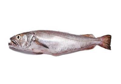 Pescada Branca - MerIuccius merIuccius