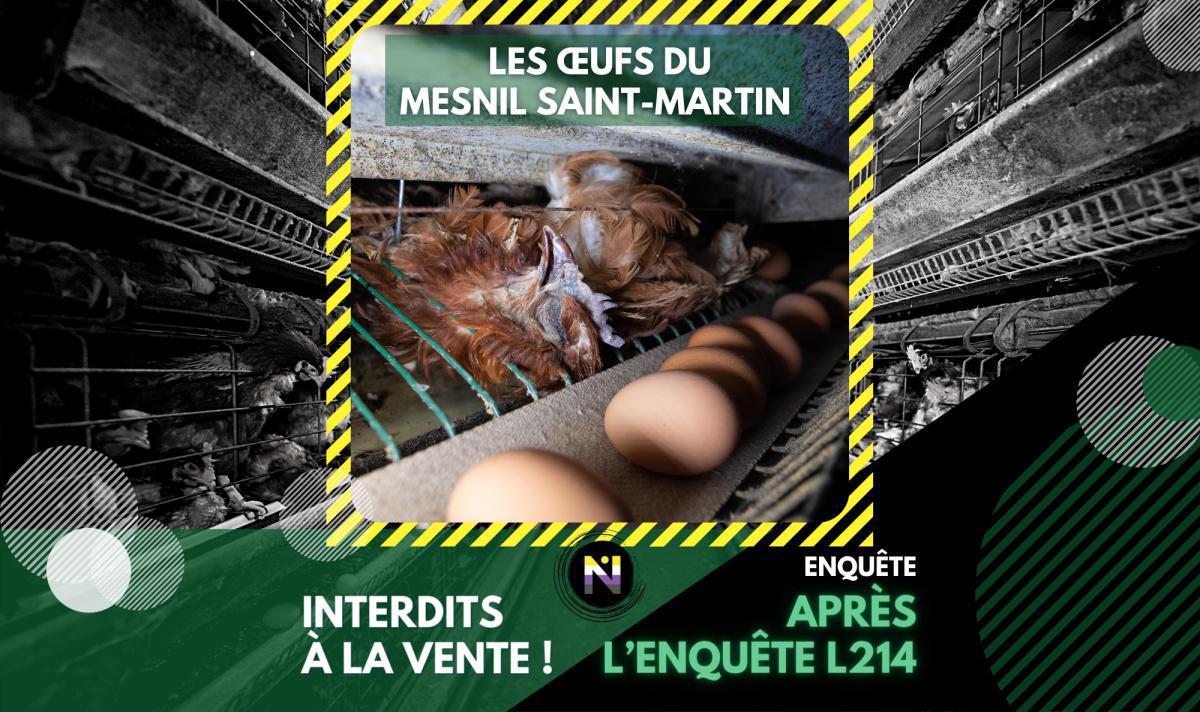 Après l'enquête L214, les œufs du Mesnil Saint-Martin interdits à la vente!