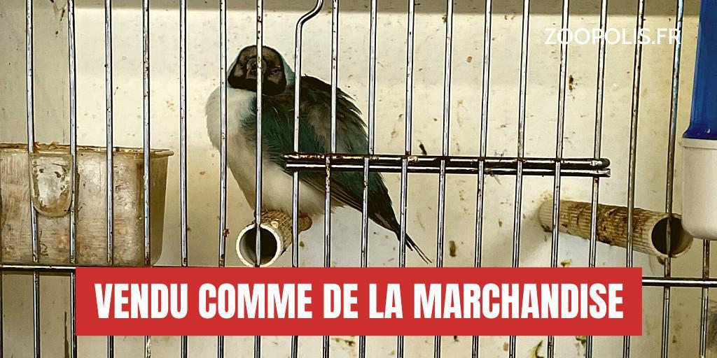 FERMER le MARCHÉ aux OISEAUX de PARIS