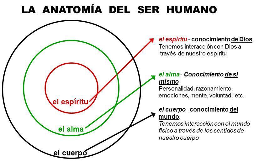 1-4 La Anatomía del Ser Humano