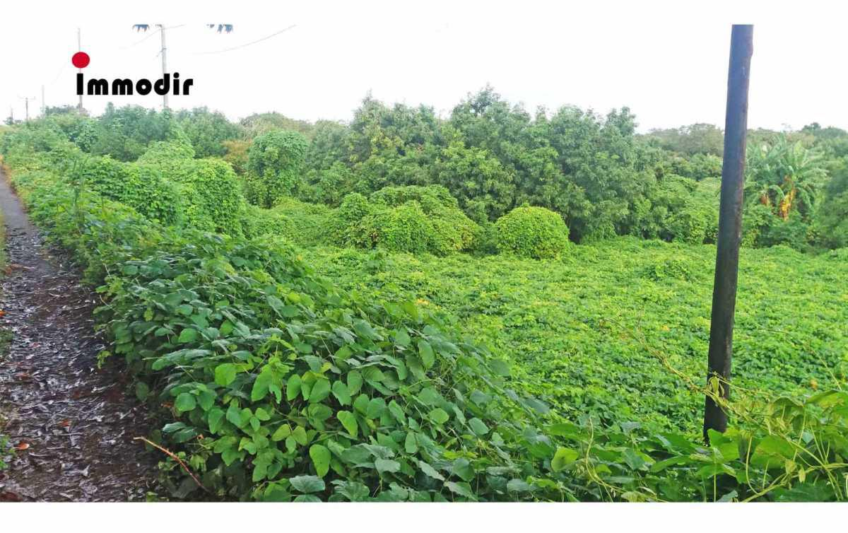 Land for Sale in Charmose - 156938
