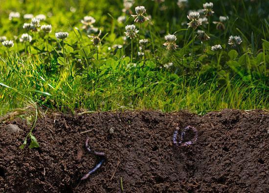 Een gezonde bodem als basis voor je klimaatadaptieve tuin