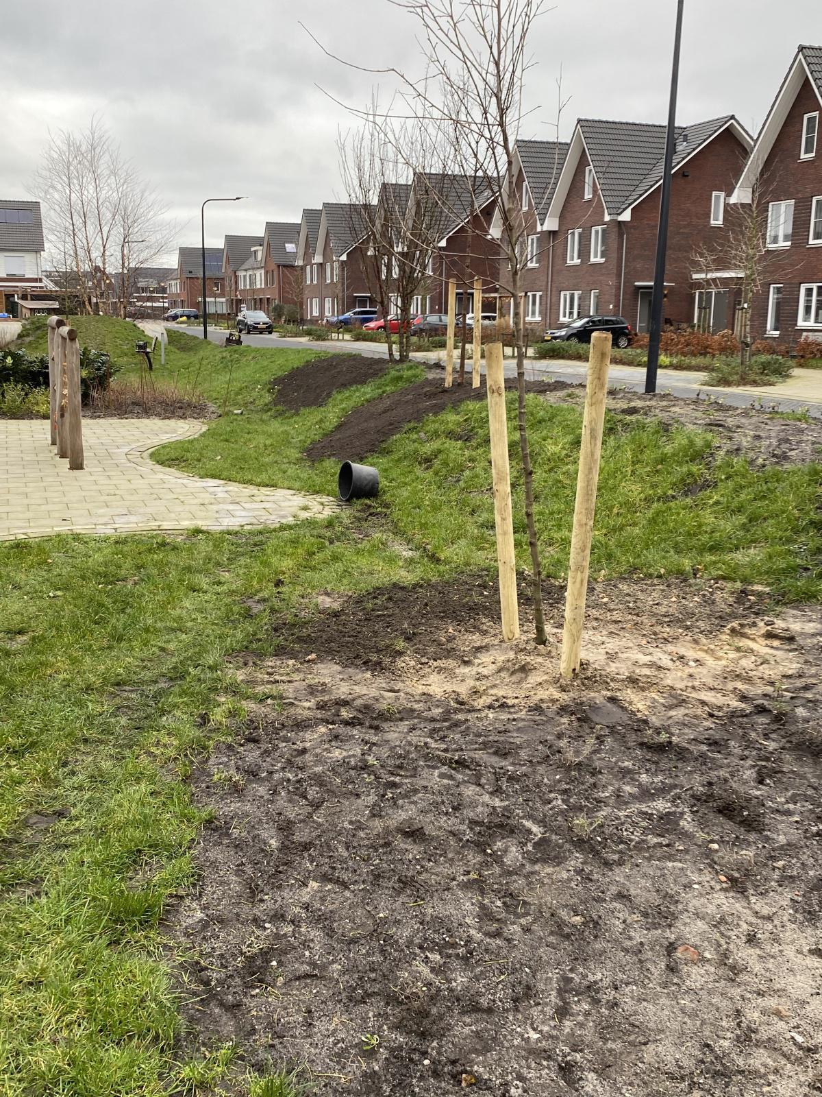 Laatste bomen zijn geplant in de wijk