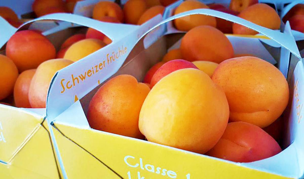 Journée de l'abricot