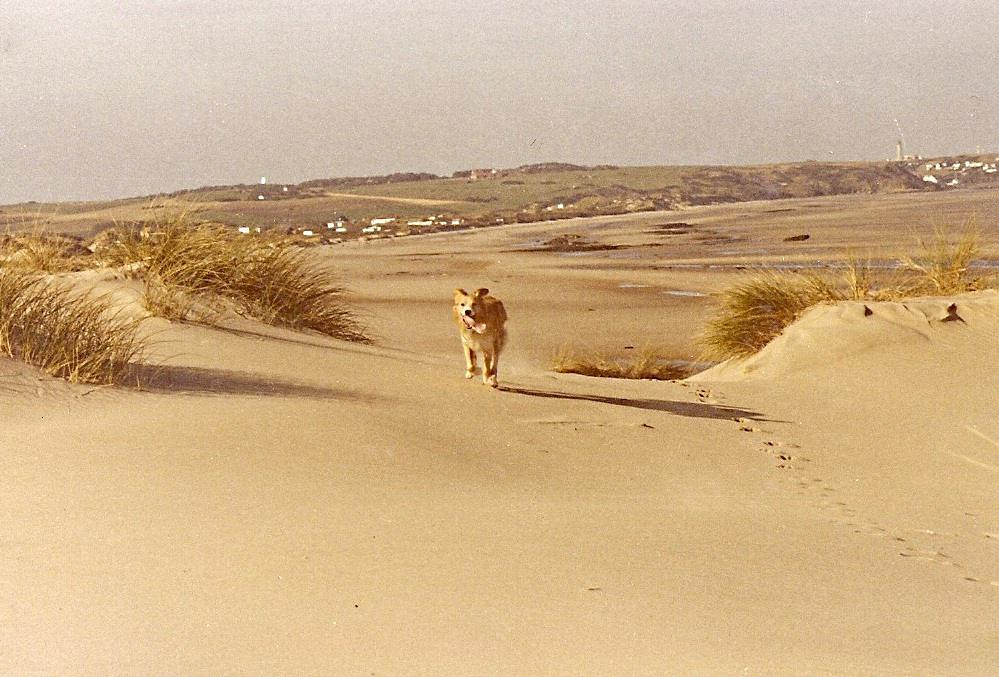 Plage920 Ancienne Dunes Blanches Wissant