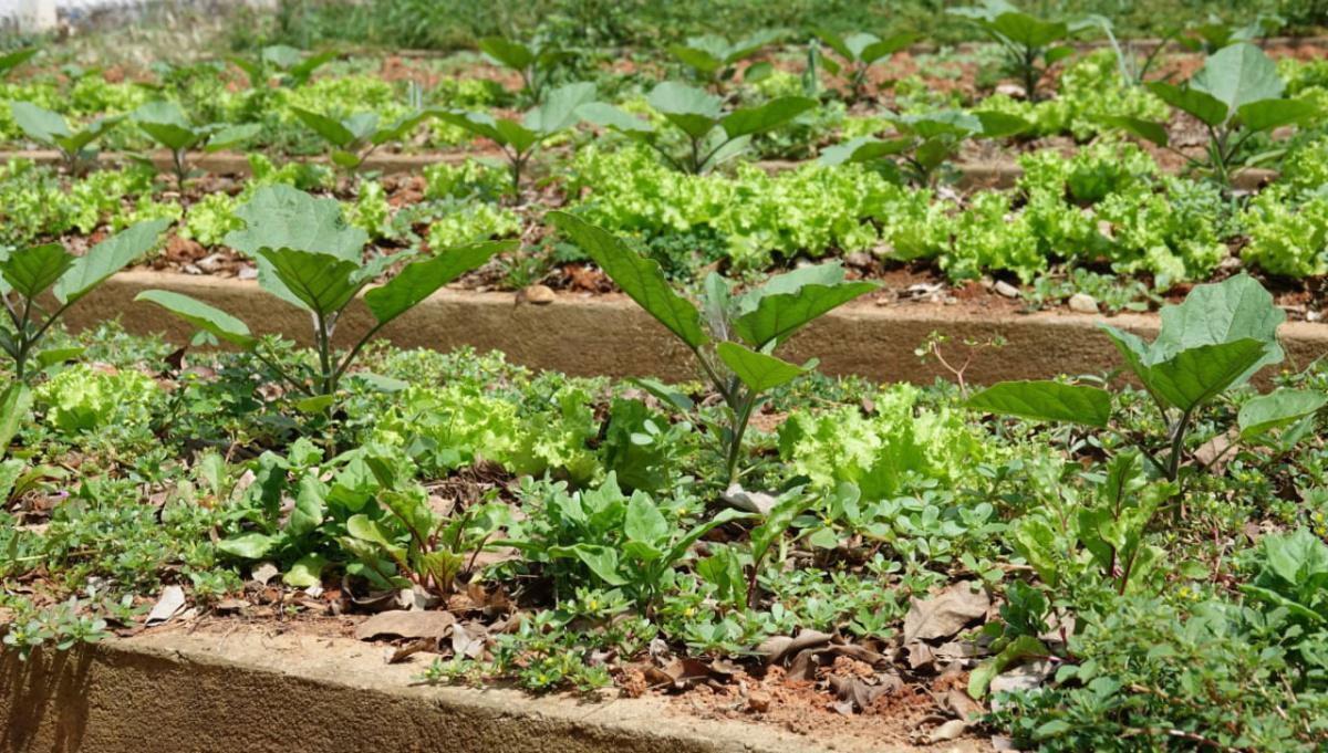 Horta Agroecológica