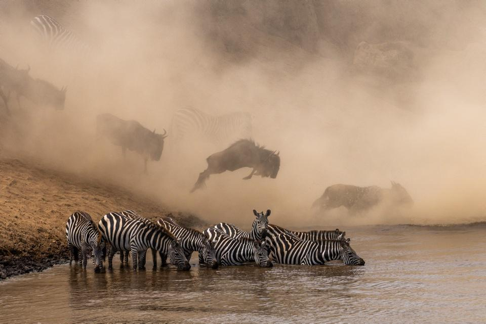 """[Focus] - Découvrez les magnifiques photos du projet """"Prints for Wildlife"""" !"""