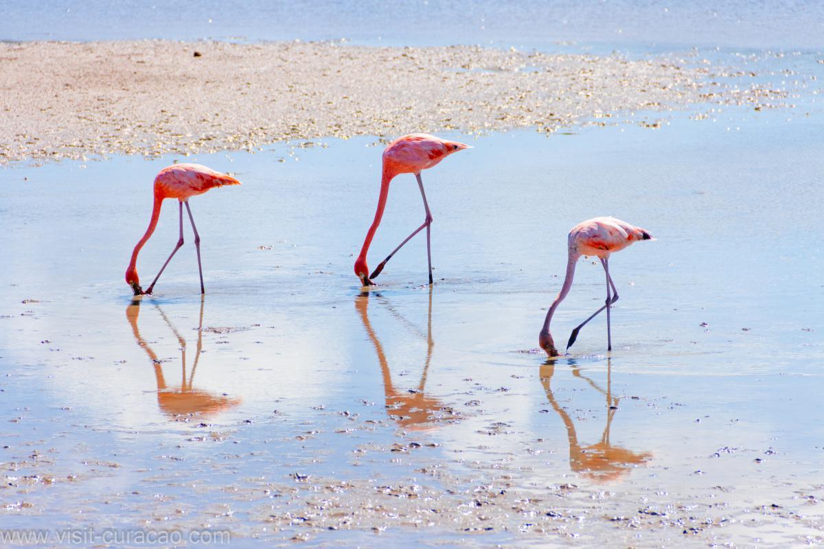 Flamingos in ''Williwood''