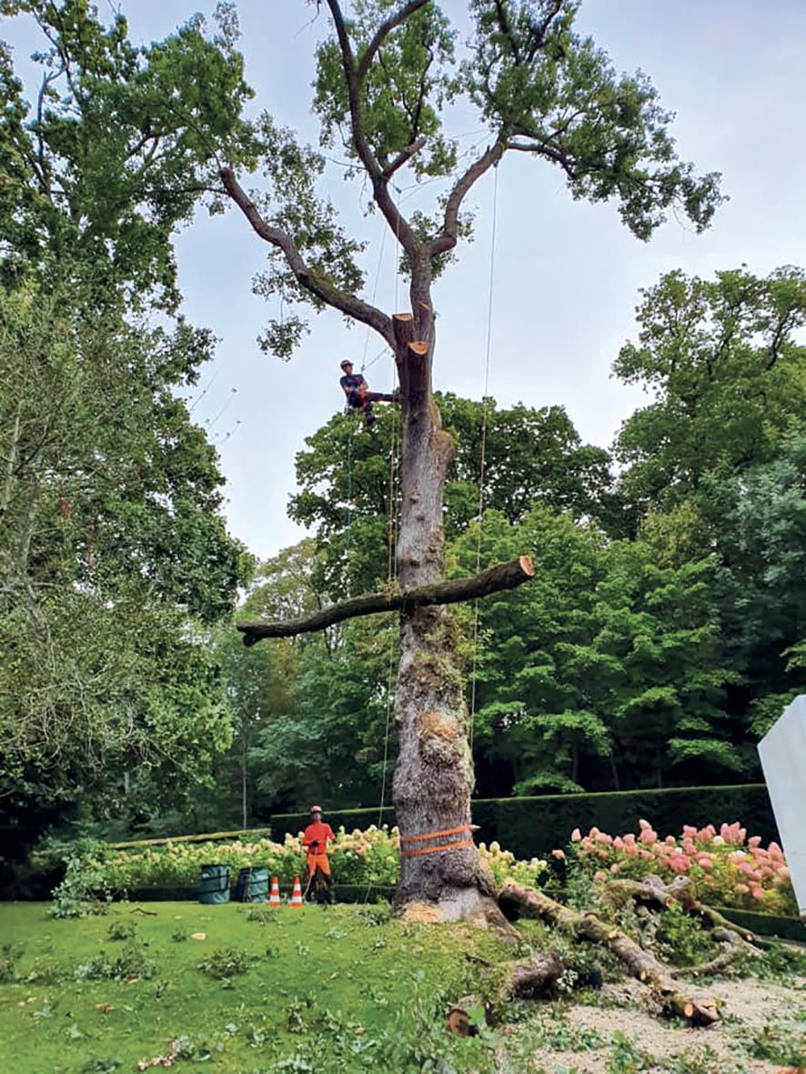 L'Arb'Aux 4 Sabots : pour l'amour des arbres !