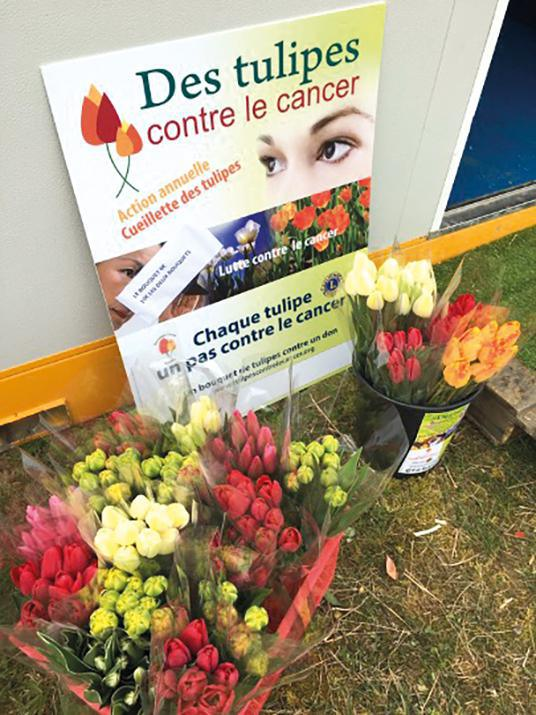 Évreux : des tulipes contre le cancer