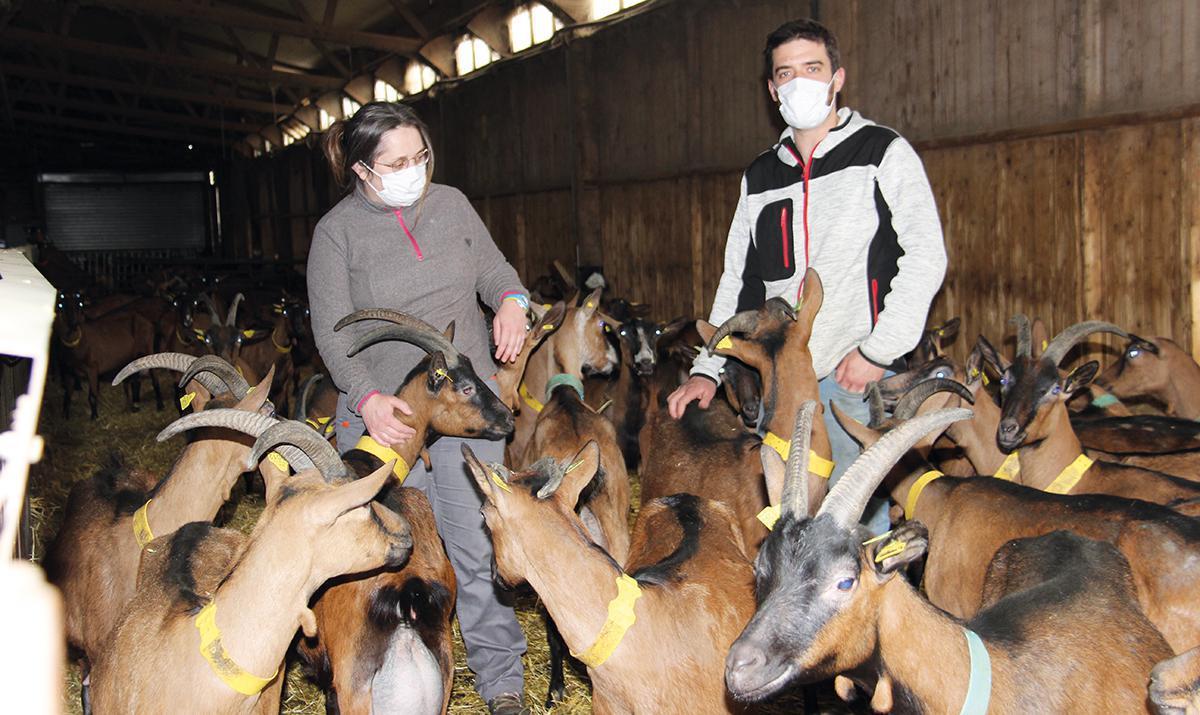 À Marsauceux, chèvres et chevreaux se portent bien