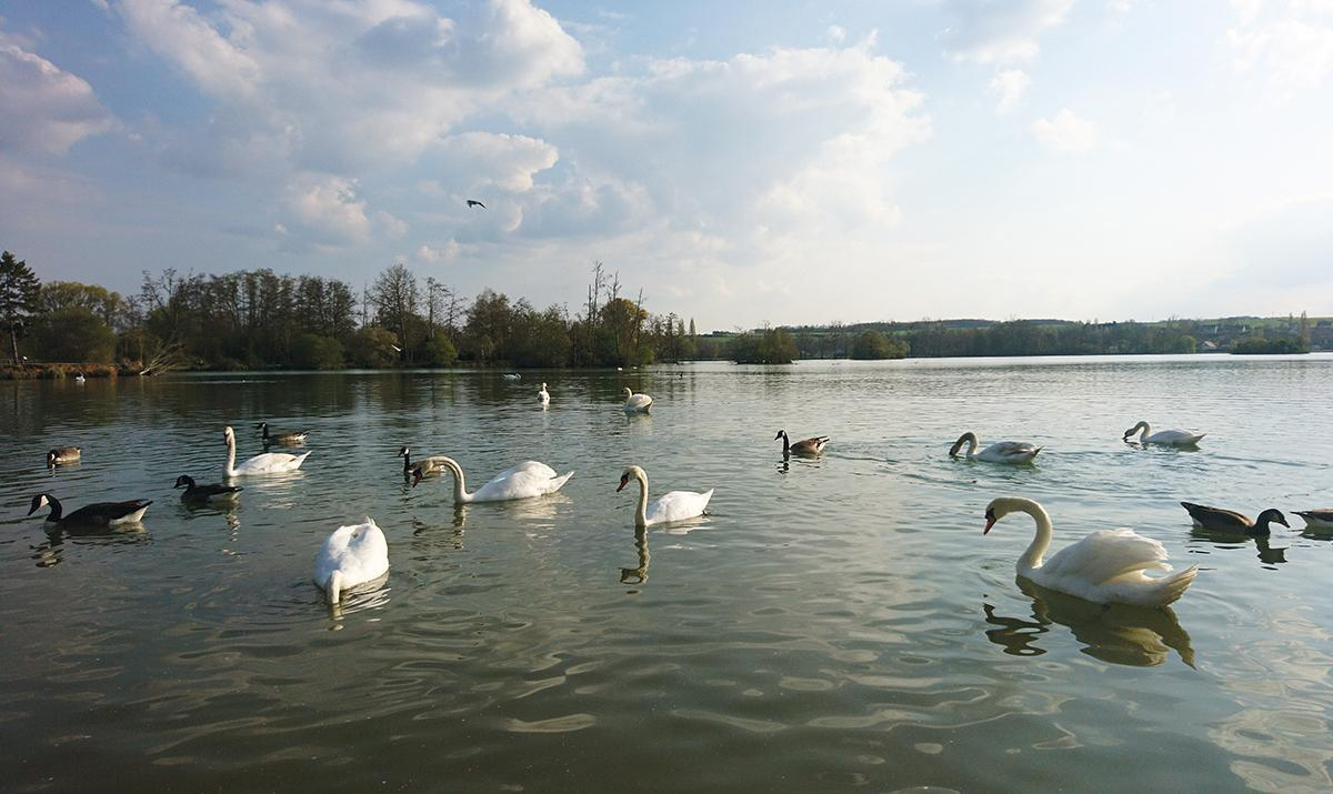 « Nettoyons notre nature ! » avec l'ASC Mézières-en-Drouais