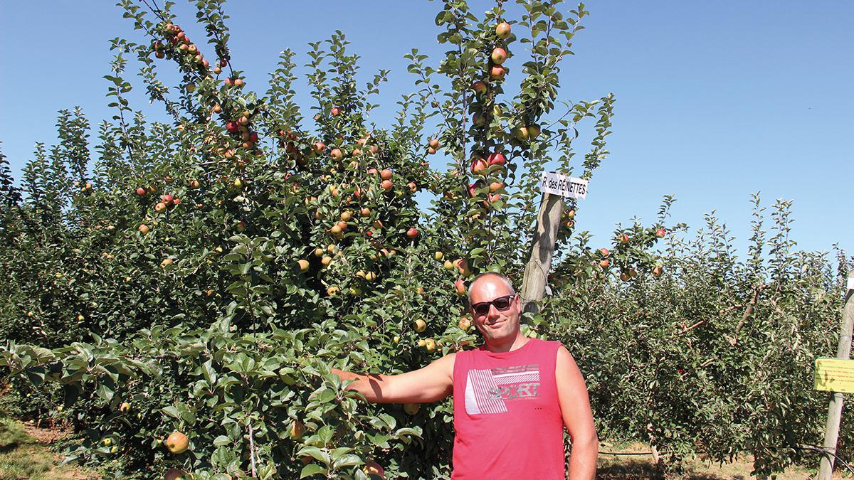 À Imbermais, la récolte des pommes bat son plein