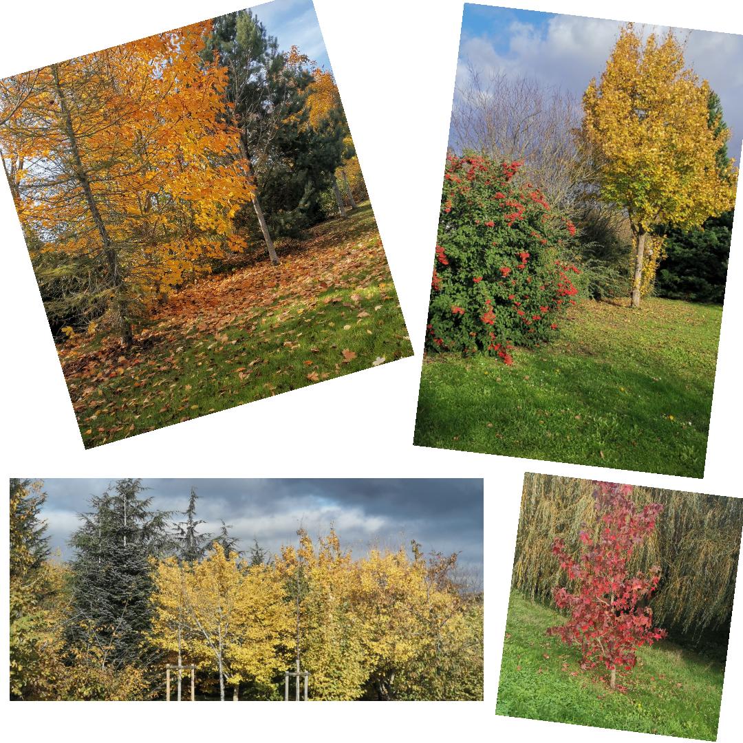 Novembre, joli mois d'automne