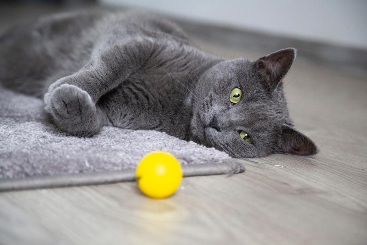Porque tener mascotas en casa beneficia a la familia