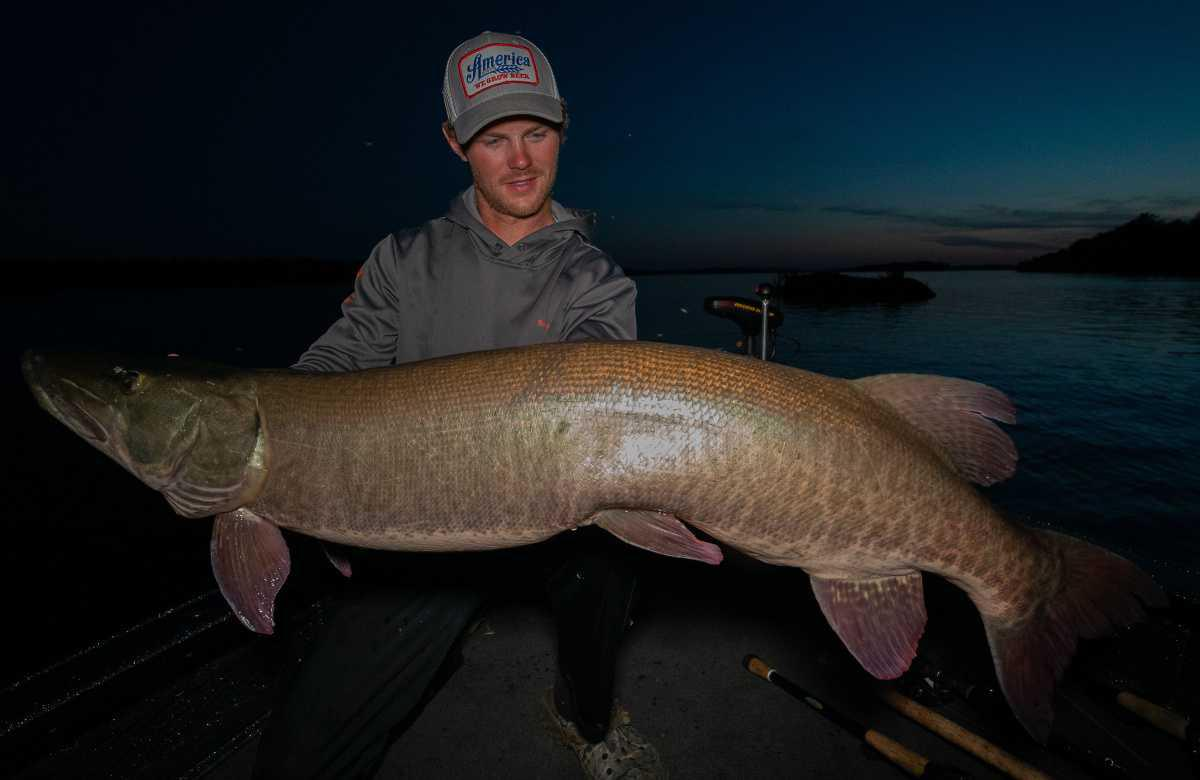 Crazy Musky Action : Lake of the Woods
