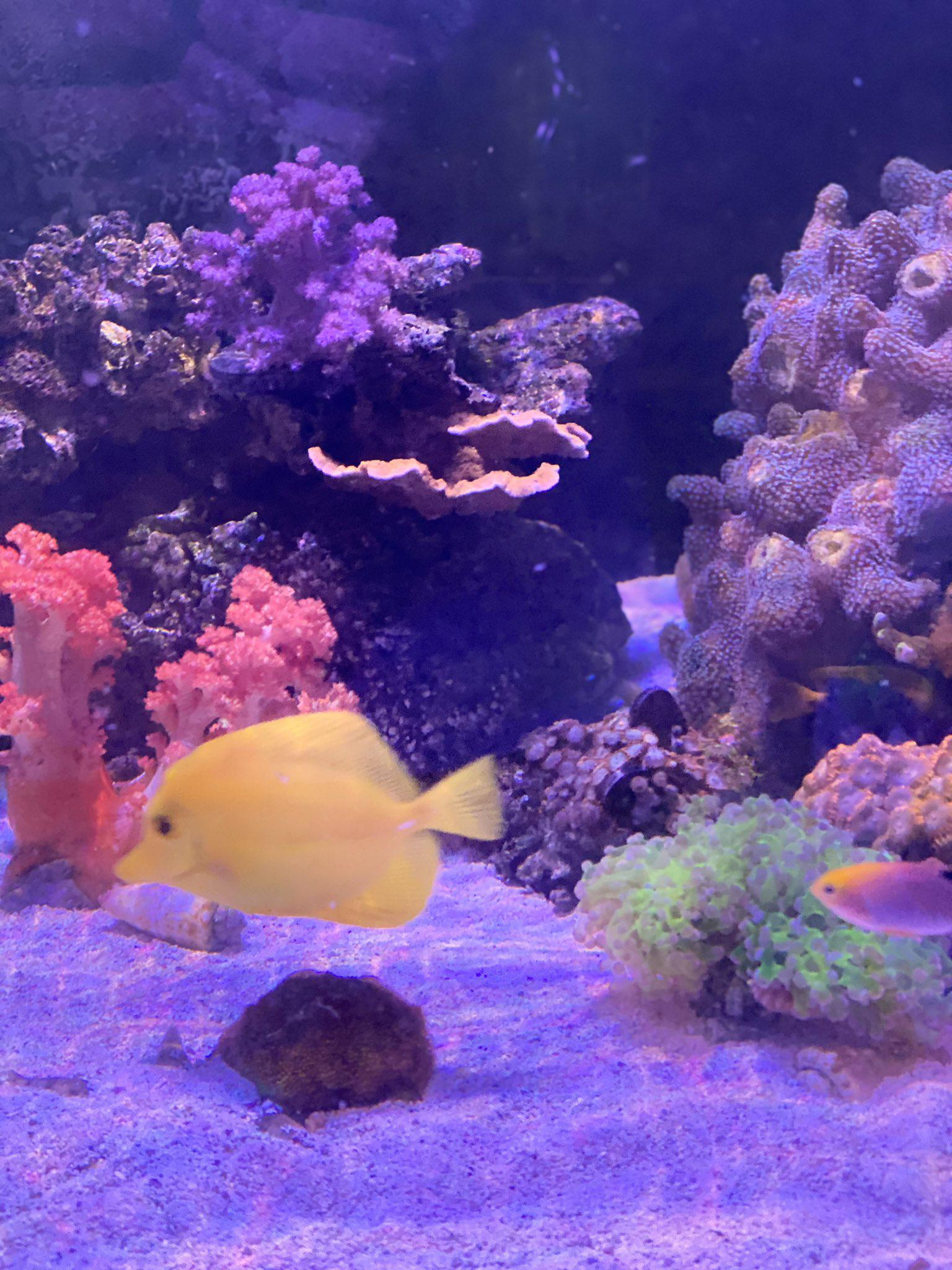 The Marine Biology Society