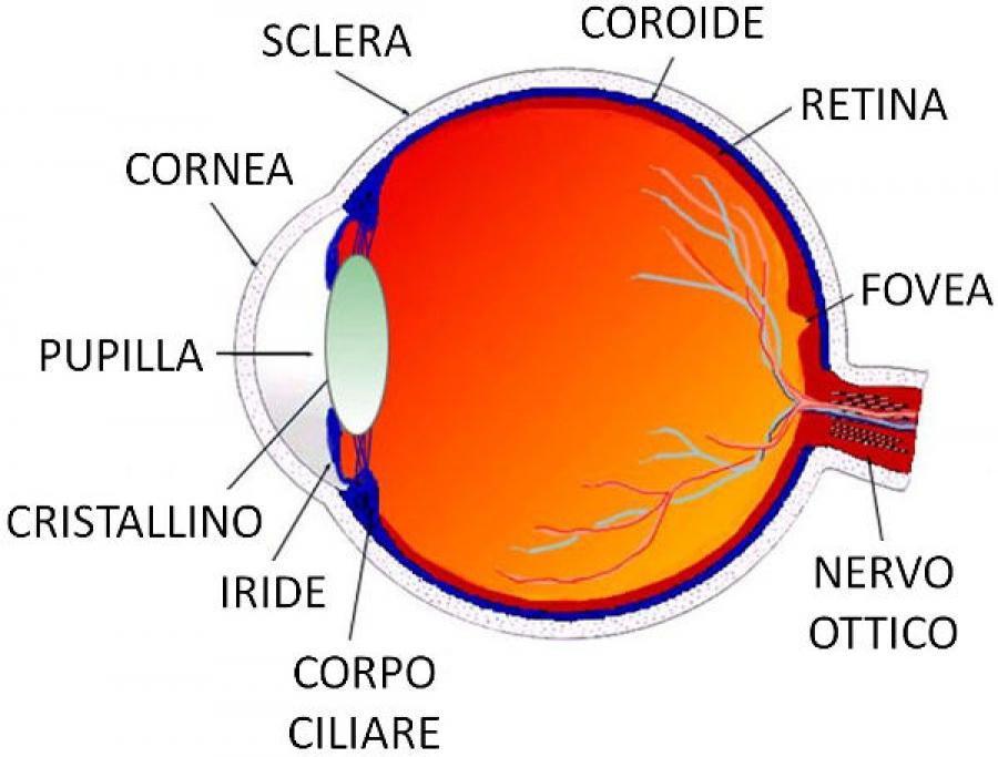 Disturbi dell'occhio