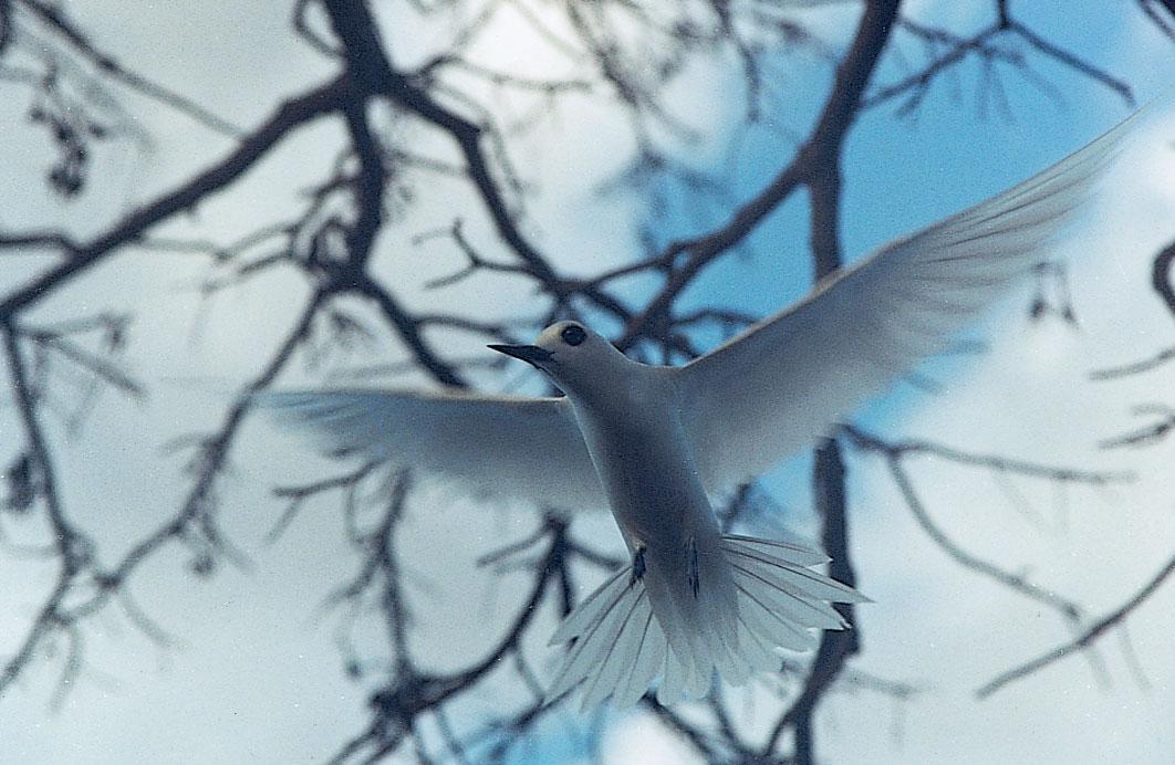 As Aves de Noronha
