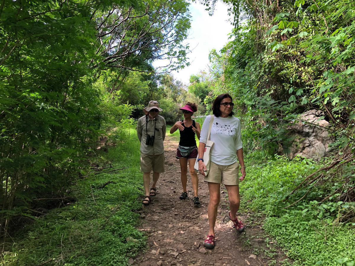 Turismo de Observação de Fauna em Noronha
