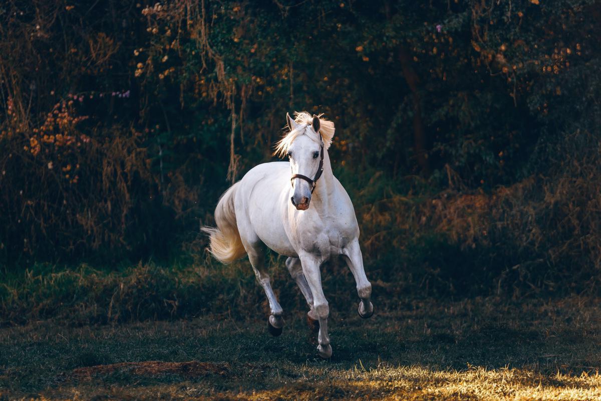 Déterminer la robe de son cheval