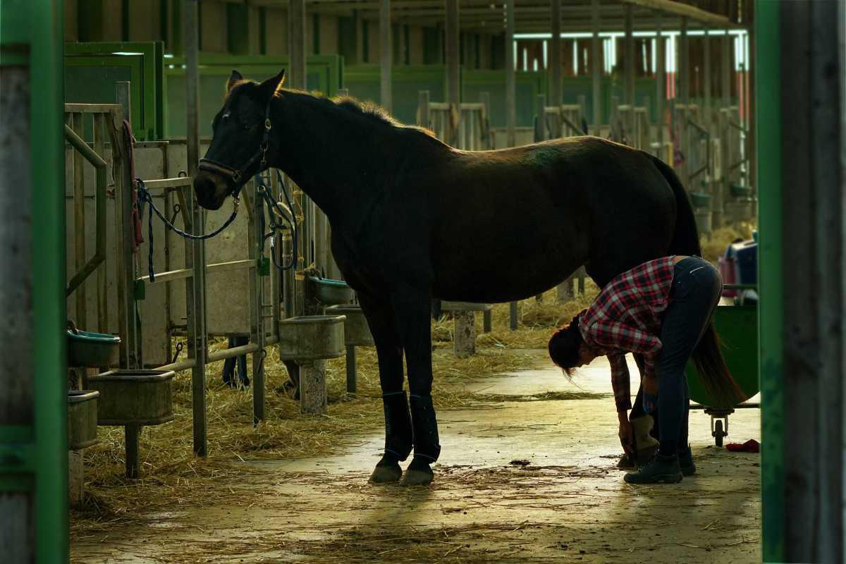 Devenir jockey