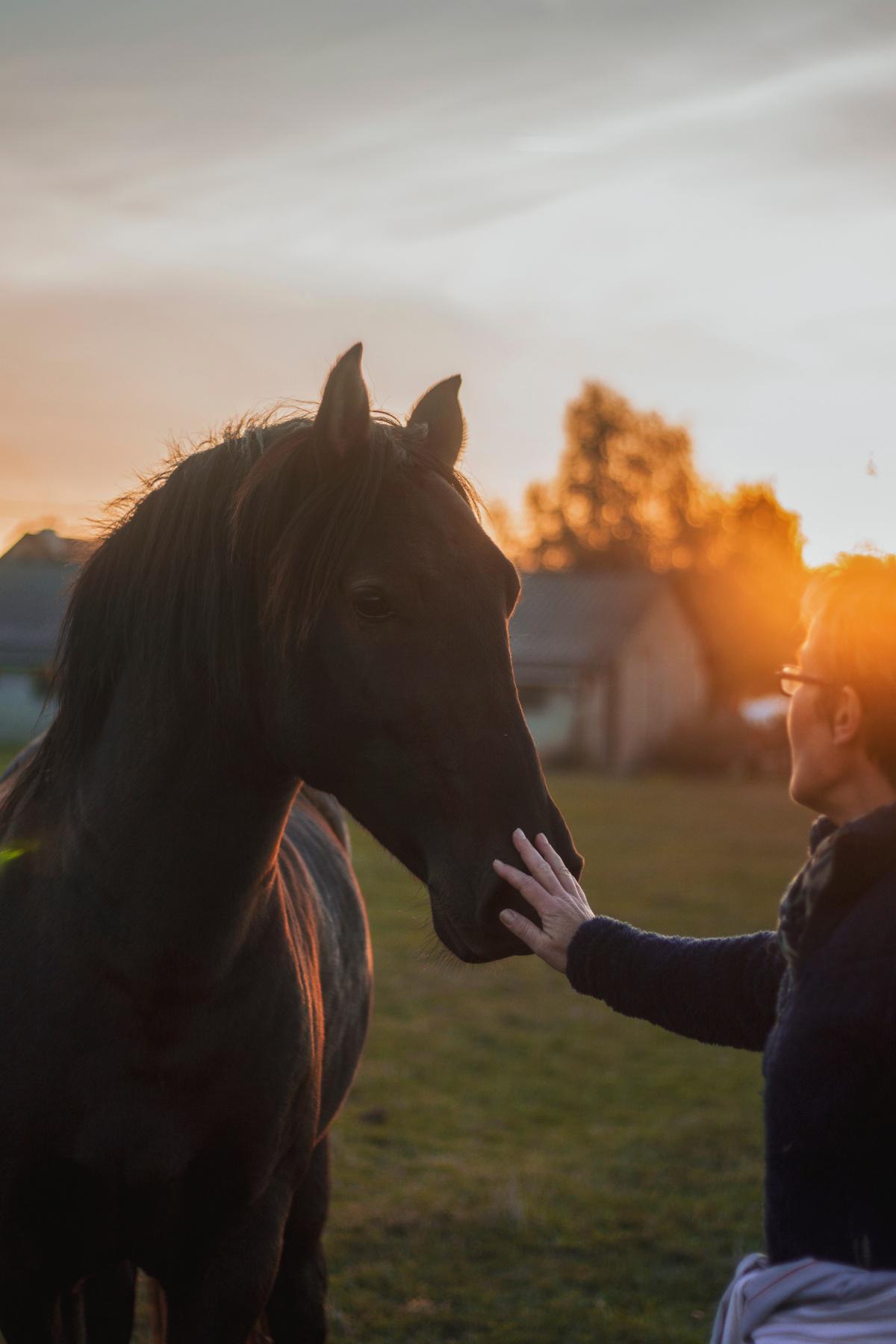 La santé de votre cheval, les points clefs !