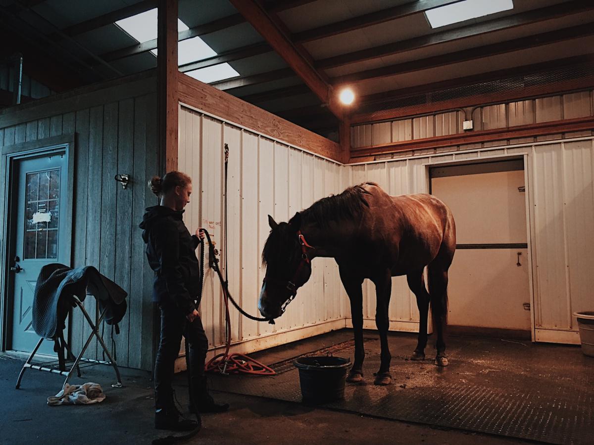 Avoir son premier cheval : kit de survie