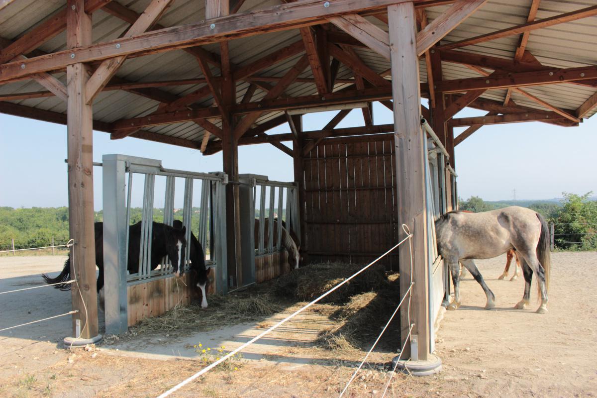 L'écurie active est-elle une solution pour le futur equestre?