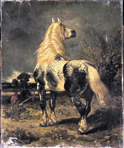 Les races de chevaux : le Percheron