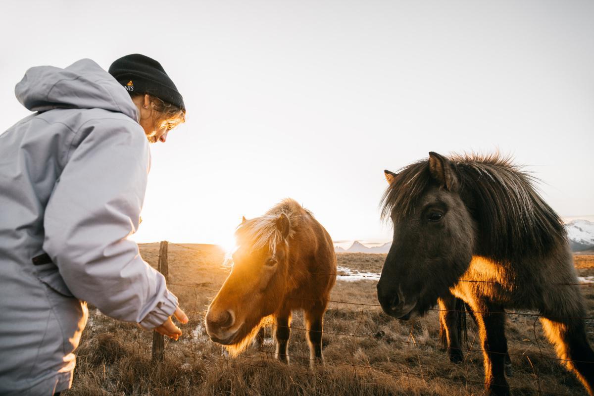 Devenir vétérinaire équin