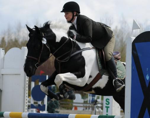 Les races de chevaux : le PAINT HORSE