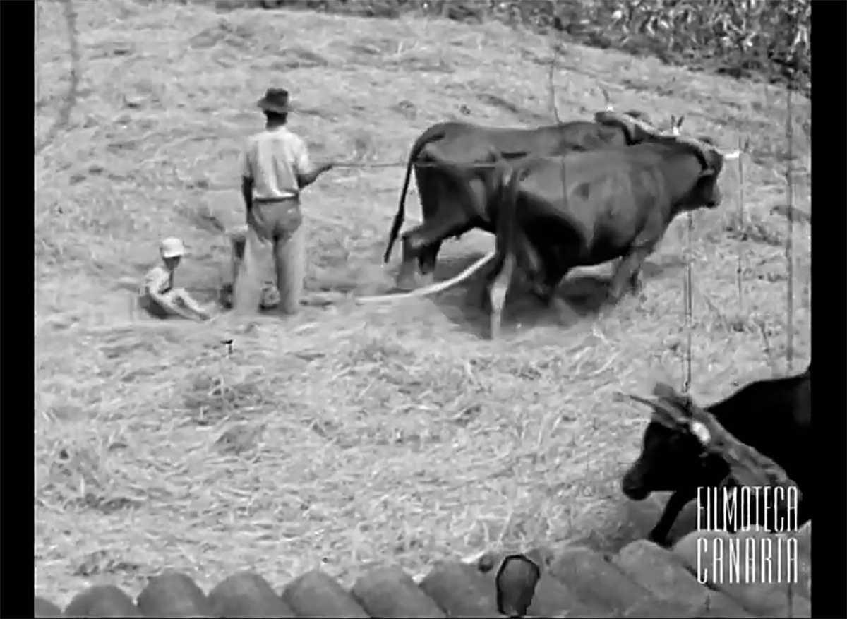 Oude tradities en beroepen op de Canarische Eilanden (video)