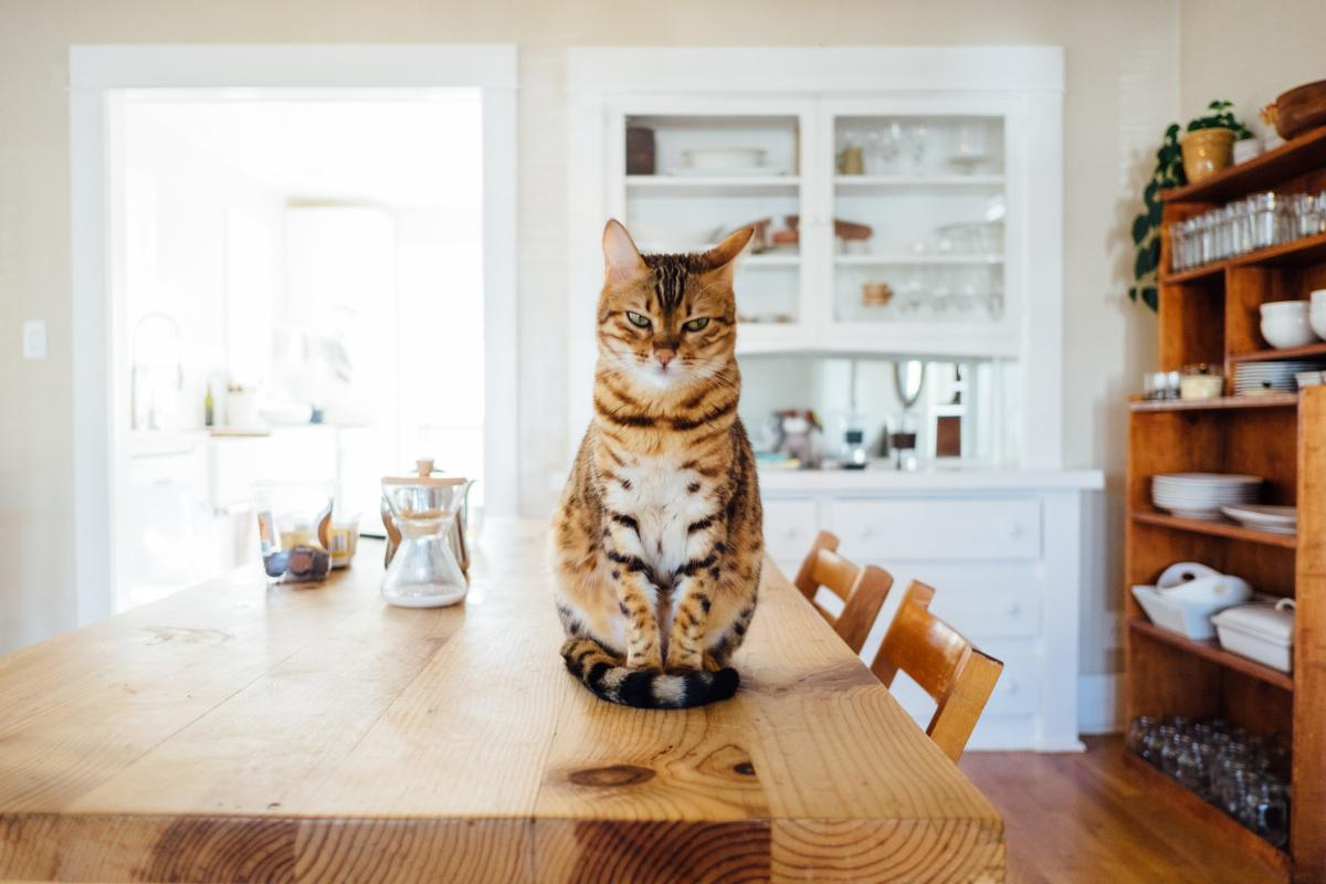 How Pets Save Humanity | Ponderings Magazine