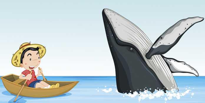 Um mergulho com baleias