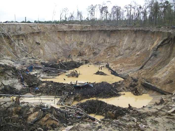 Ouro desertifica floresta