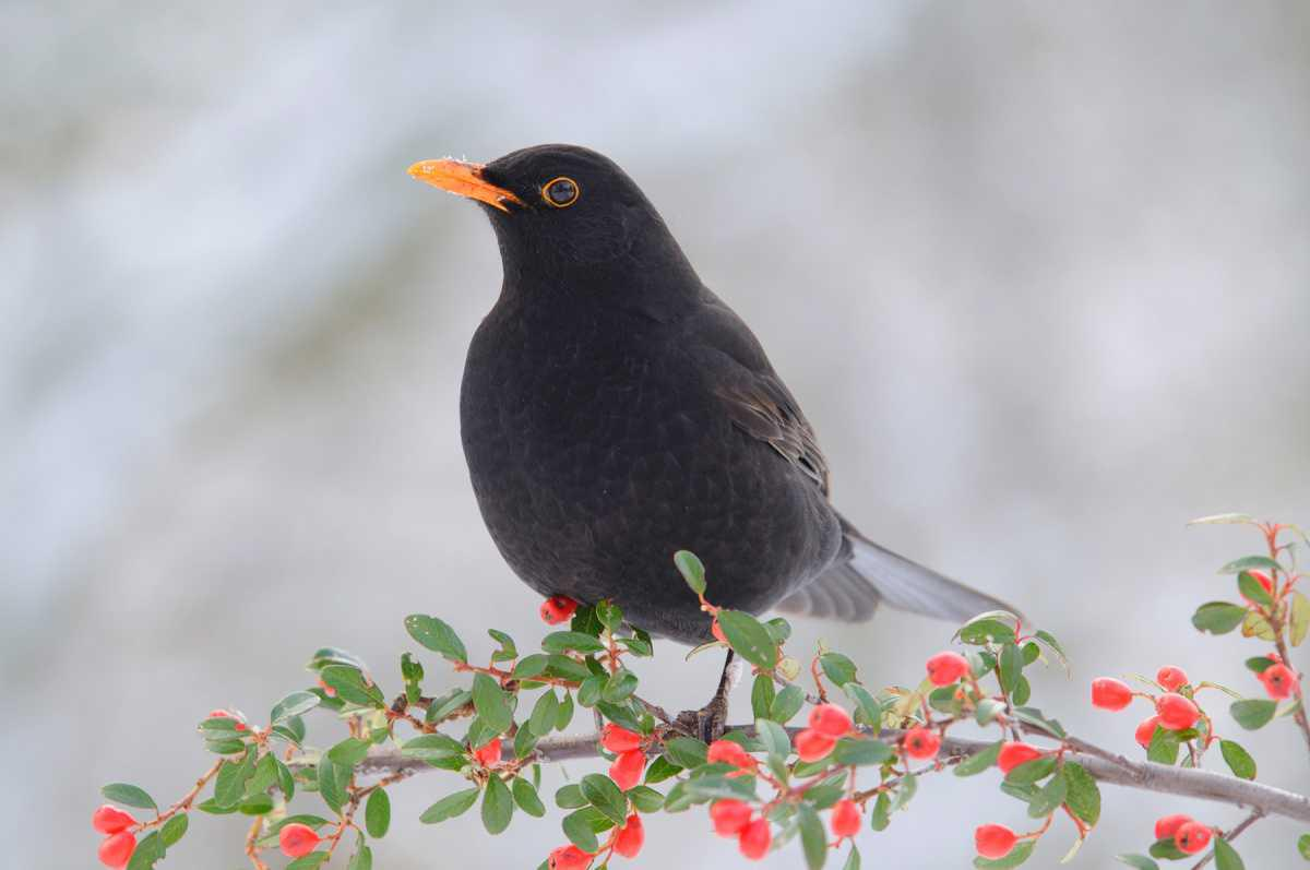 """NABU-Aktion """"Stunde der Wintervögel"""" dieses Wochenende"""