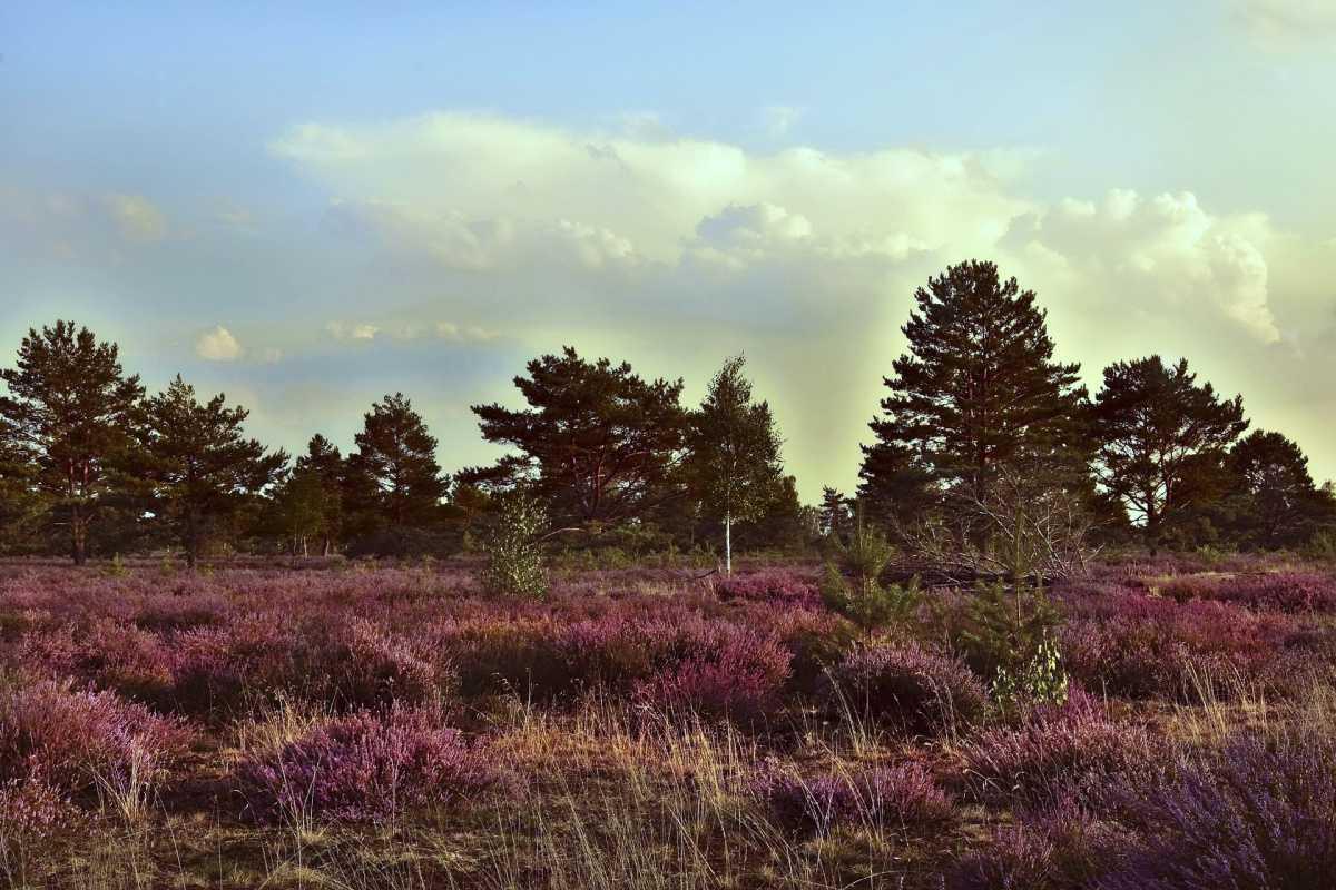 NABU Naturbeobachtungsexkursion in die Tinner Dose / Sprakler Heide