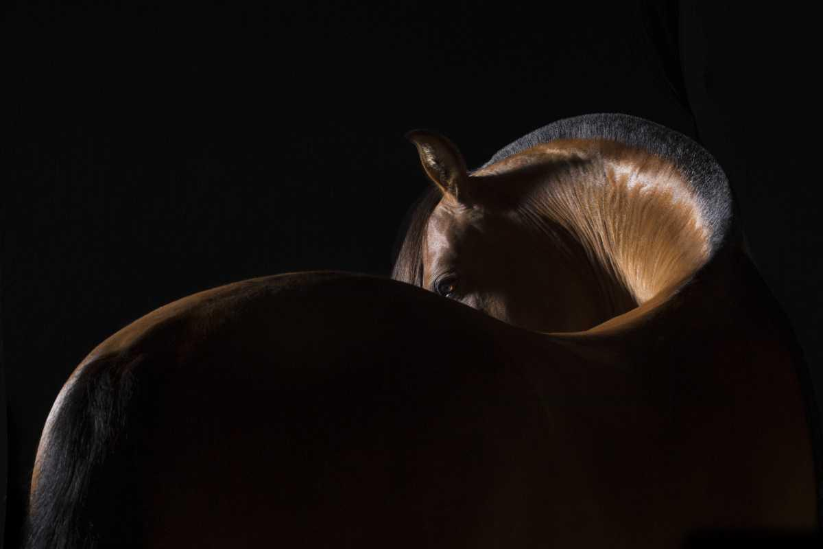Pet Book - Céline Bissat - Photographe