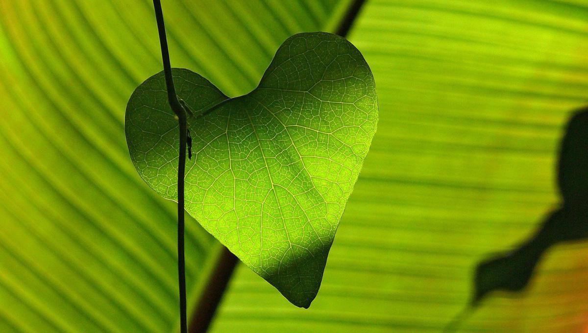 Le CBD et le système cardiovasculaire