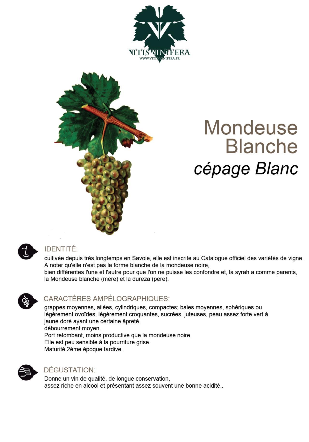 CÉPAGE - MONDEUSE BLANCHE
